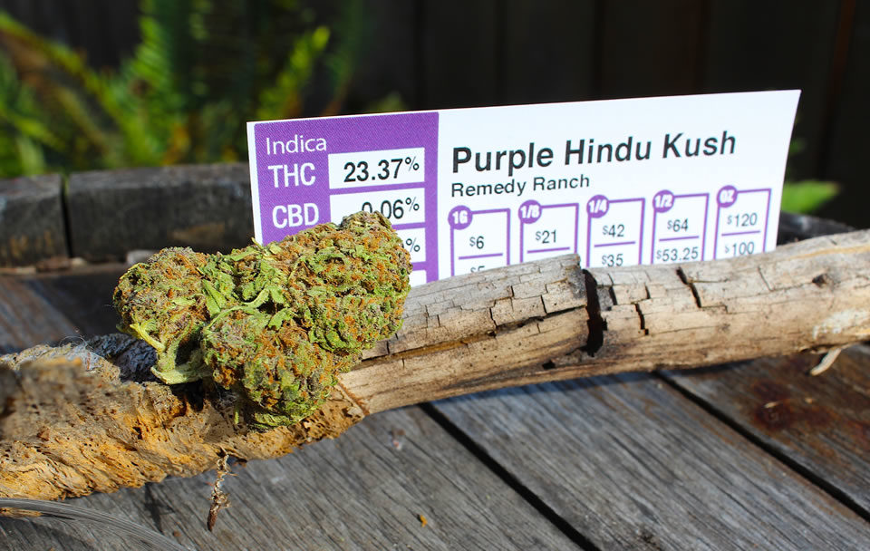 Remedy Ranch: Purple Hindu Kush